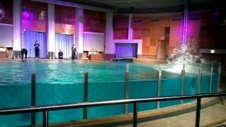 Delfiini, osa1