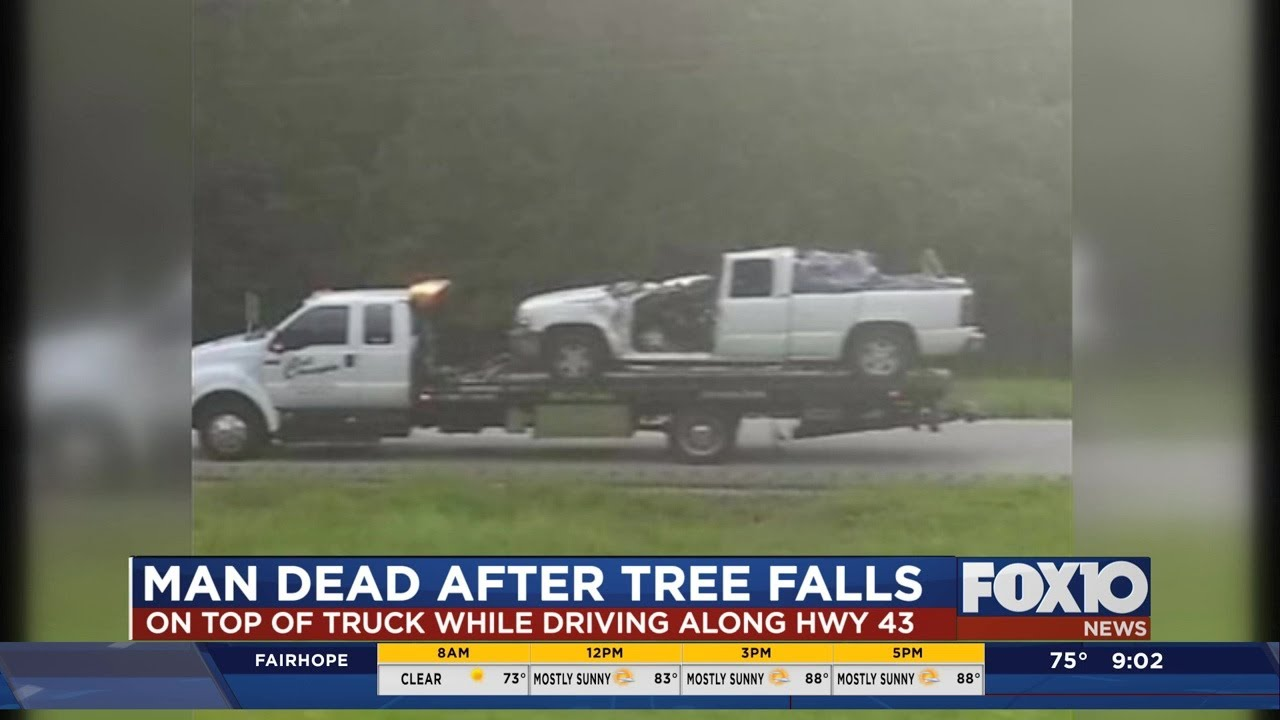 Man killed on Highway 43 when tree falls on his truck