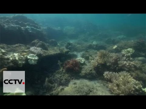 Diver discovers ancient Roman city underwater in Tanzania