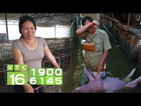 Tan hoang vì dịch tả Châu Phi, dân bất lực nhìn giá lợn tăng   VTC16