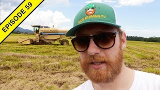 Rice Harvest 2018 | How Rice is Harvested in Brazil!
