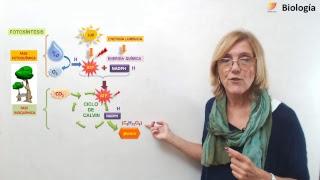Biología: Fotosíntesis (12/09/2018)