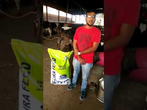 Cattle feed Samriddhi 8000