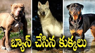 Banned and Dangerous Dogs Around In the World || Telugu Facts