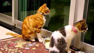 Смешные коты, кошки и другие животные (funny cats 2019) – НЕ РАЗРЕШАЕТСЯ СКУЧАТЬ, НОВЫЕ ПРИКОЛЫ
