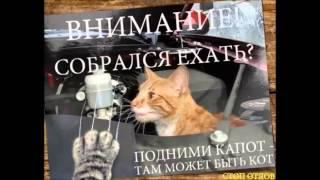 """помощи приюту """"Верный"""" г.Кемерово"""