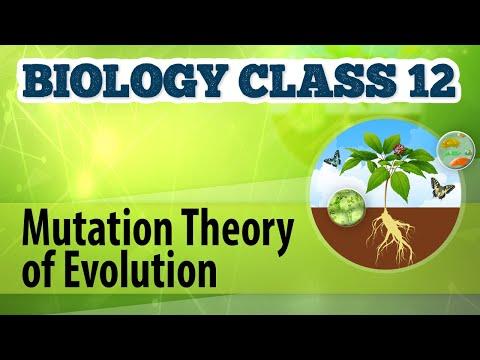 Mutation Theory of EvolutionOrigin and Evolution of LifeBiology Class 12