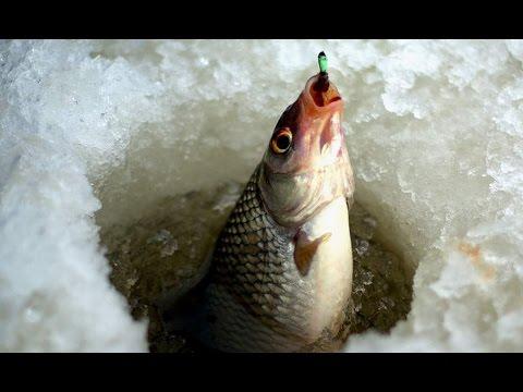 супер прикормки для рыбалки