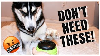 Talking Husky Vs. Talking Buttons