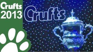 Basset Griffon Vendeen (Petit) wins Crufts Best In Show 2013