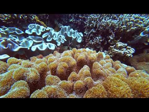 Philippines Apo Island