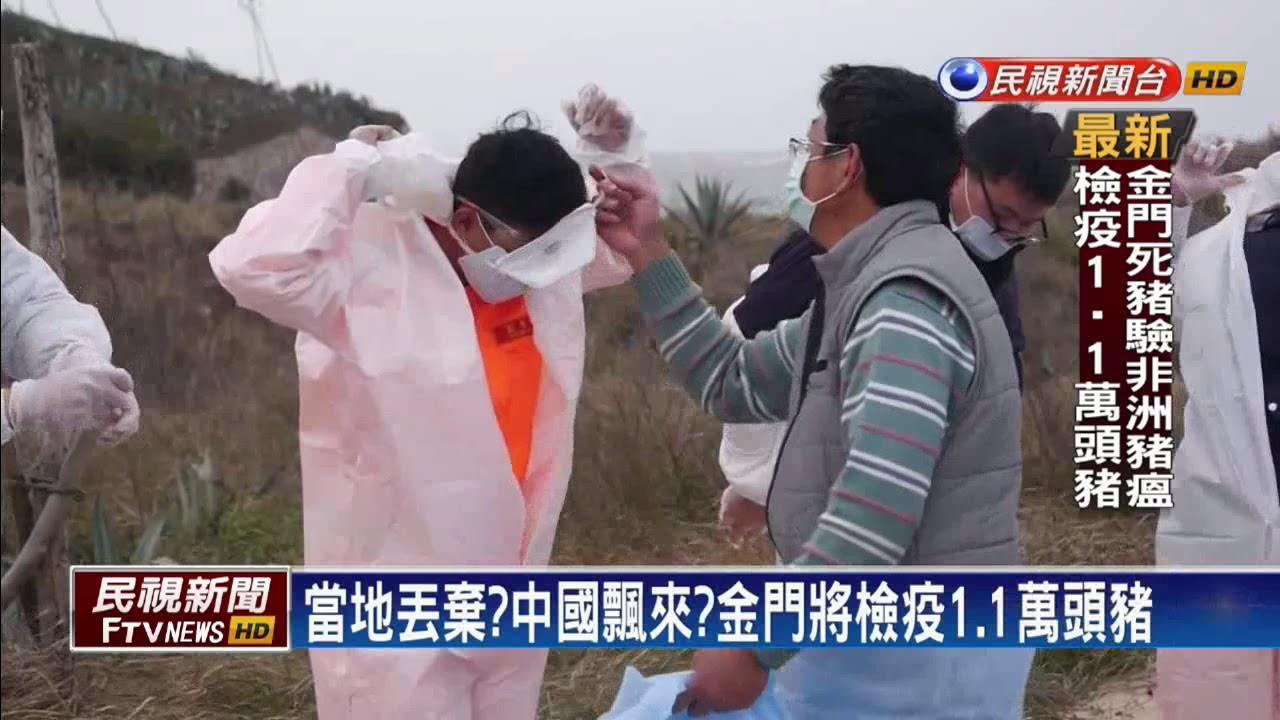 金門死豬驗出非洲豬瘟 檢疫當地1.1萬頭豬-民視新聞 - YouTube