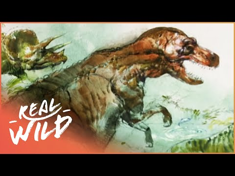 Dinosaur Hunting [Natural History Documentary] | Wild Things