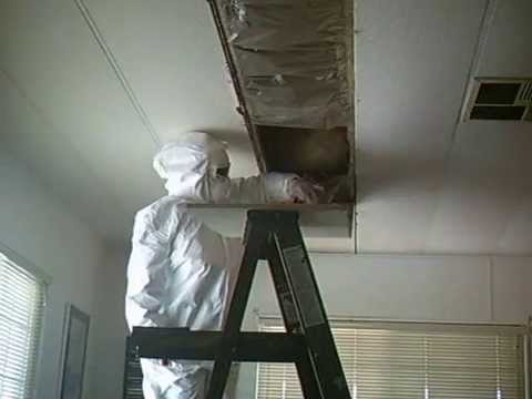 Black Mold Removal from Behind Ceiling Tiles