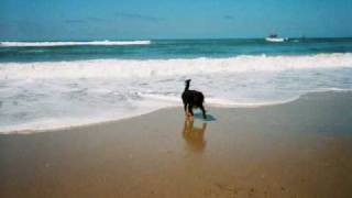 Charlie Playing Dog Beach