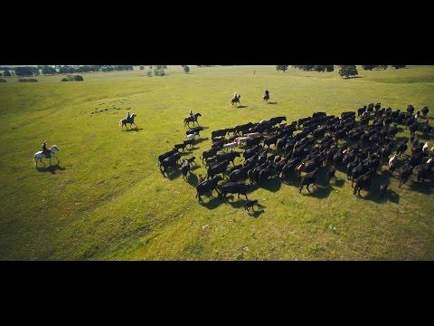 VIRBAC 2017 - Shaping the future of animal health