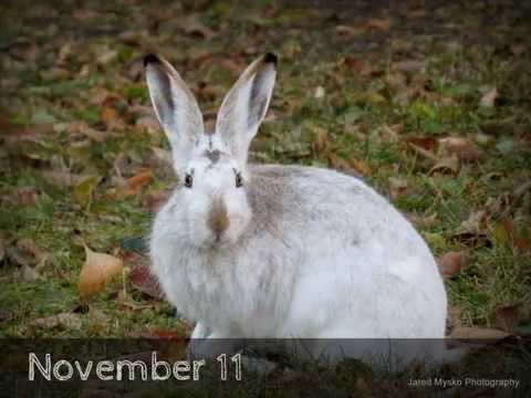 Rabbits Change Color In Three Days!