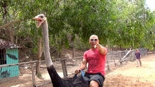 Travel un-CUT! episode 1 (Vietnam): Ride an Ostrich for $5! Crazy FUN!