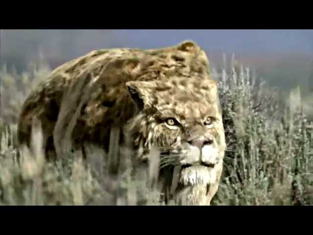 6 Saber Tooth Tiger Facts for Kids   Navajo Code Talkers