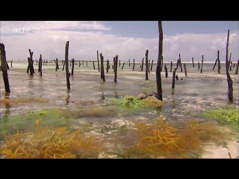 Les pecheuses d'algues de Zanzibar