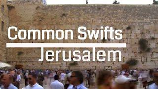 Swifts Over the Holy City of Jerusalem