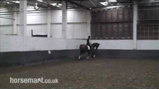 How To Leg Yield Your Horse For Dressage