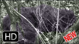 The Bigfoot Report - Bigfoot News #16 - Ketchum releases Erickson Project Clear Bigfoot video
