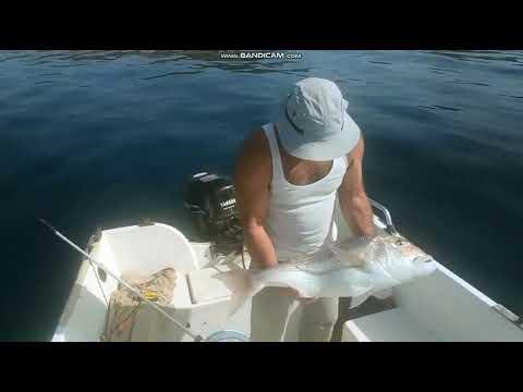 Συναγρίδα 9 κιλών από τον Αστυπαλίτη ερασιτέχνη ψαρά Γιάννη Σταυλά και τα ανάμεικτα συναισθήματα