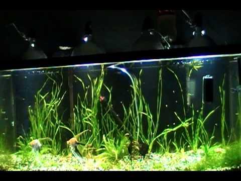 Cheap Aquarium Lighting - YouTube