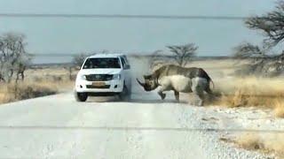 видео: Гиганты в Ярости! На что способны гигантские животные...
