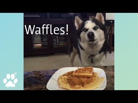 Mom Made Waffles! 🐶🐶🐶 | Doggo Friday