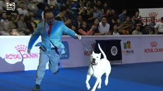 National dog show 2021 | Dog show 2021