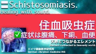 🔴ドイツ振動医学による住血吸虫症編|Schistosomiasis by German Oscillatory Medicine. 地方病 検索動画 23
