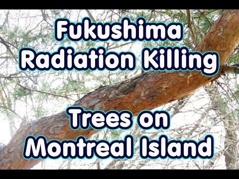 Fukushima Radiation Killing Trees On Island Of Montreal - Across Canada Reports