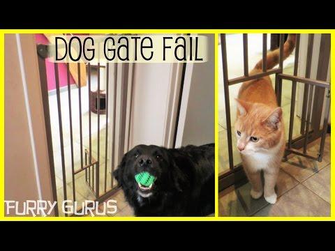 Our Awesome Dog Gate – FAIL | Furry Gurus