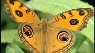 「珍愛自然-讓台灣更精彩」宣導短片