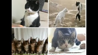 New Funny Cats Compilation November 2017