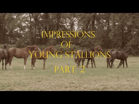 LINDHOLM HORSES - Impressions Of Young Stallions Part.2