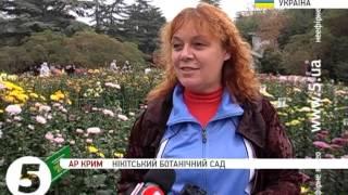 60-й ''Осінній бал хризантем'' у Криму