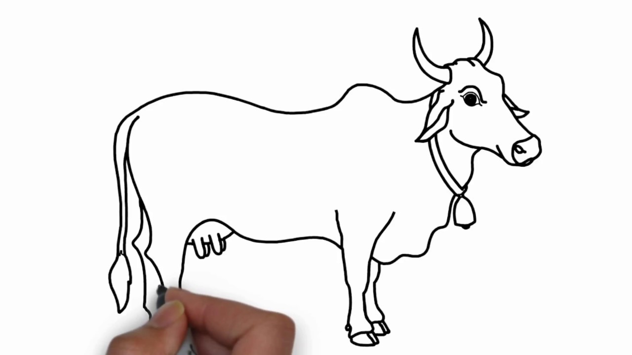 How To Draw Cow For Kids Colouring With Colore Marker Youtube