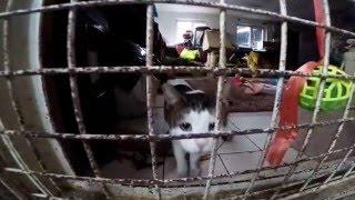 Приют для кошек ул.Зорге.г.Москва