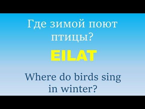 Вопрос: Какие птицы поют зимой ночью?