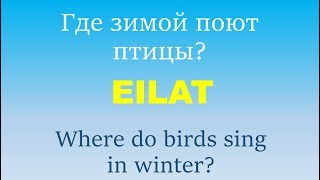 Где зимой отдохнуть в Кузбассе?