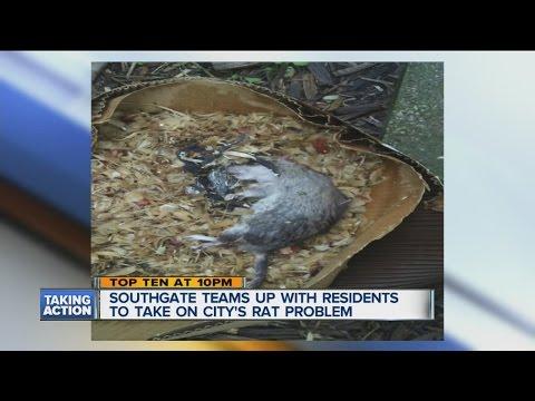 Southgate's rat problem