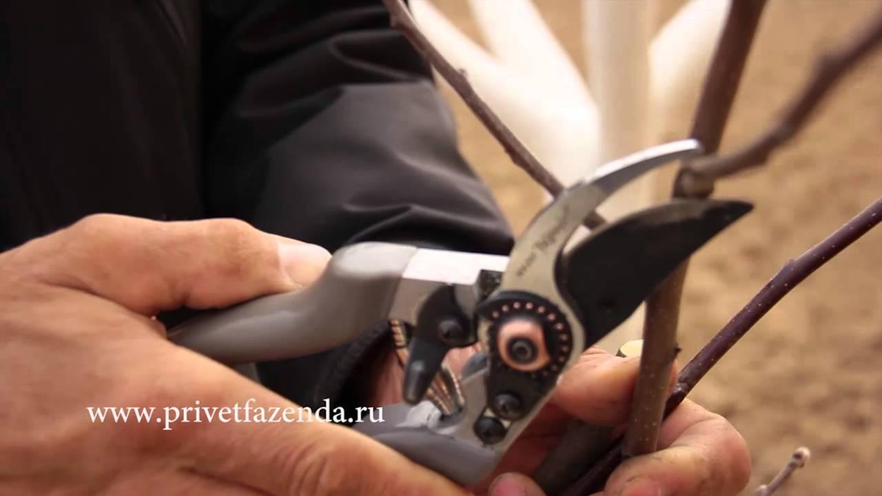 Виноград Секатор прививочный - YouTube