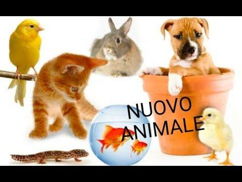 Il mio animale buzzpls com for Test quale animale sei