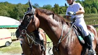 Конный спорт. Красивые кадры лошадей.