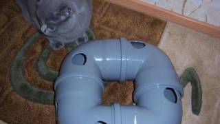 Самодельные игрушки для котят