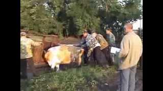 Рейдерский захват перепелиного хозяйства в Воронежской области.