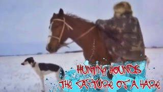 Охота с борзыми: Поимка зайца / Hunting hounds: the Capture of a hare